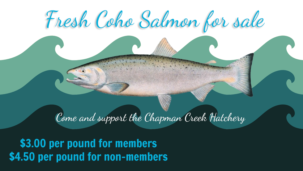 fresh coho for sale chapman creek hatchery while supplies last